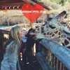 Guide to Colorado Springs: Cheyenne Mountain Zoo